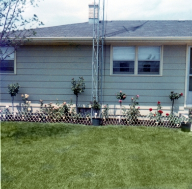 Roses by the house, 1971