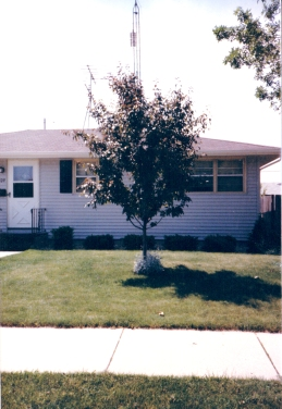 Mom's crab tree, 1984